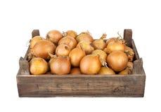 Onios i en träspjällåda arkivbilder