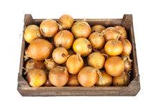 Onios i en träspjällåda royaltyfri bild