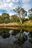 Onkaparinga River on a sunny day with reflections of trees and c. Liffs at old Noarlunga south australia on 23rd August 2018 royalty free stock image