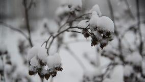 Onkruid behandelde sneeuw tijdens een blizzard stock videobeelden