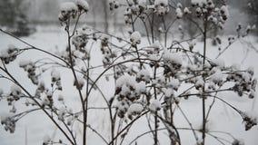 Onkruid behandelde sneeuw tijdens een blizzard stock video