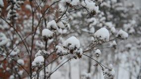 Onkruid behandelde sneeuw tijdens een blizzard stock footage