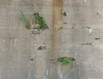 Onkruid in concrete barsten Stock Afbeeldingen
