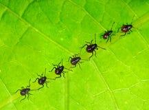 Onlangs geboren insecten royalty-vrije stock afbeelding