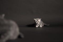 Onlangs geboren katje Royalty-vrije Stock Afbeeldingen