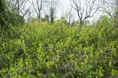 Onlangs gekweekte groene struiken met verscheidene kleine erachter bomen royalty-vrije stock foto's