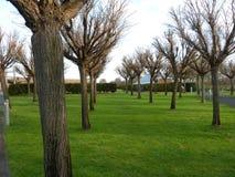 Onlangs gesnoeide die Bomen bij Yering-Post, de eerste wijngaard van Victoria in de Yarra-Vallei wordt gevestigd Stock Afbeeldingen