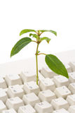 Online learning. Green plant and computer keyboard, concept of online learning Stock Images
