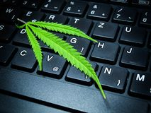 Online weeds Royalty Free Stock Photos