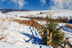 Ono fechtuje się drogą śnieżny las w górach Obrazy Royalty Free