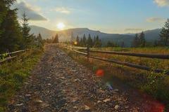 Ono fechtuje się, samochód, las, słońce, kamienie, lato, naturalny, droga zdjęcia royalty free