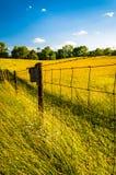 Ono fechtuje się w trawiastym polu, przy Antietam Krajowym polem bitwy, Maryl Zdjęcia Royalty Free