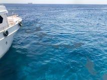 Ono kłania się strona biały statek i widok kałuże, wycieki ropy, brudny ciecz ekologiczny błękit soli morze ocean zdjęcie stock