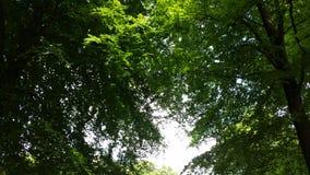 Ono przygląda się przez drzew Obraz Royalty Free