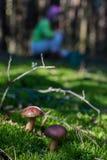 Ono rozrasta się w lesie Obrazy Royalty Free