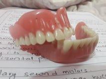 Ono uśmiecha się gdy ty wciąż zęby zdjęcia stock