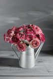 Ono wałkoni się i biali perscy jaskierów kwiaty Kędzierzawy peoni ranunculus w Kruszcowej szarej rocznika podlewania puszce, kopi Fotografia Royalty Free