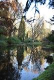 Ono widzii w jezioro fotografia royalty free
