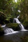Onomea瀑布在毛伊热带植物园里  免版税库存照片