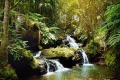Onomea-Fälle gelegen in tropischem botanischem Garten Hawaiis auf der großen Insel von Hawaii Stockbild