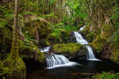 Onomea Falls in Hawaii. Tropical botanical gardens stock photos