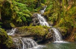 Onomea Falls Stock Image