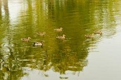 Onondaga Lake and Park Royalty Free Stock Photography