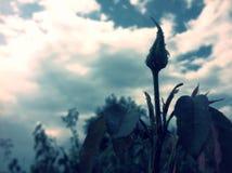 Onontloken bloem Royalty-vrije Stock Afbeeldingen