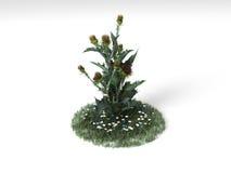 Onopordum acanthium Obrazy Stock
