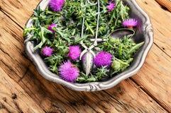 Onopordum en herbalism distel stock foto's