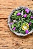 Onopordum en herbalism distel stock foto