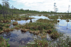 Onoverschrijdbaar moeras in Siberische taiga Stock Foto's