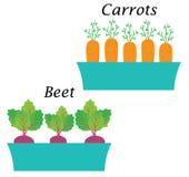 Onpot della barbabietola e della carota Vettore Fotografia Stock