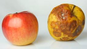 Onr腐烂的被损坏的成熟的苹果和一个成熟苹果在白色背景 影视素材