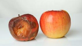 Onr腐烂的被损坏的成熟的苹果和一个成熟苹果在白色背景 股票录像