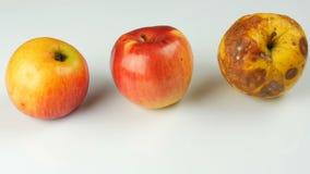 Onr腐烂的被损坏的成熟的苹果和两成熟苹果在白色背景 股票录像