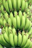 Onrijpe bananen Royalty-vrije Stock Fotografie