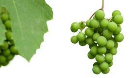 Onrijpe die clusters van druiven met bladeren op een witte achtergrond worden geïsoleerd royalty-vrije stock foto