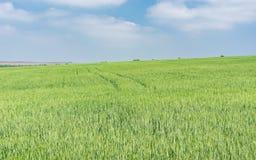 Onrijpe die gewassen in Mei worden ingediend Royalty-vrije Stock Fotografie