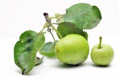 Onrijpe groene appel op een tak Stock Foto's