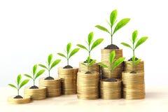Onroerende goedereninvesteringen en bedrijfsconcept, Installatie het groeien op muntstukkengeld op wtiteachtergrond stock foto's