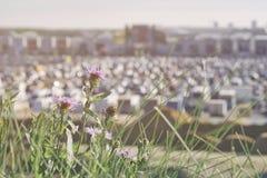 Onscherp parkeerterrein naast moderne wandelgalerij, de zomer zonnige dag, met bloemen in de voorgrond Samenvatting vaag autopark Stock Afbeelding