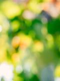 Onscherpe de wijngaard defocused achtergrond of textuur Royalty-vrije Stock Afbeelding