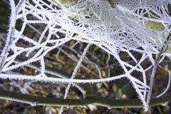 Onscherpe de winter van de vorst spiderweb boom Stock Fotografie