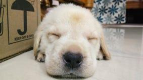 Onschuldige hond royalty-vrije stock foto's