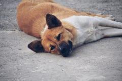 Onschuldige hond royalty-vrije stock afbeelding