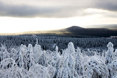 Onset of winter. Snow covered trees sun and clouds in the mountain aerea Erzgebirge, Germany royalty free stock photography