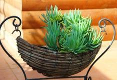 Onshore roślina Zdjęcia Royalty Free