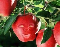 ont äpple arkivbilder