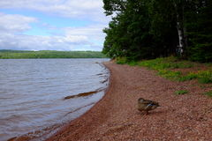 Ontario湖露营地 免版税库存照片